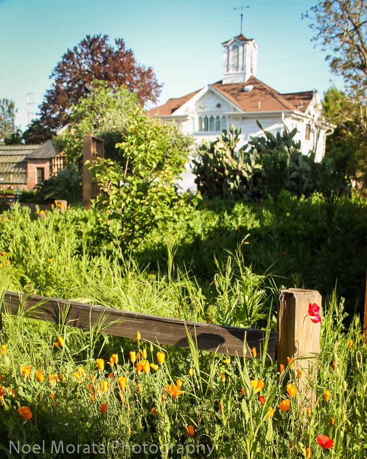 Luther burbank gardens travel photo mondays for Luther burbank home and gardens