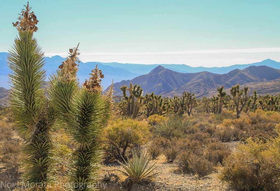 Las Vegas Spring Mountain desert flats area