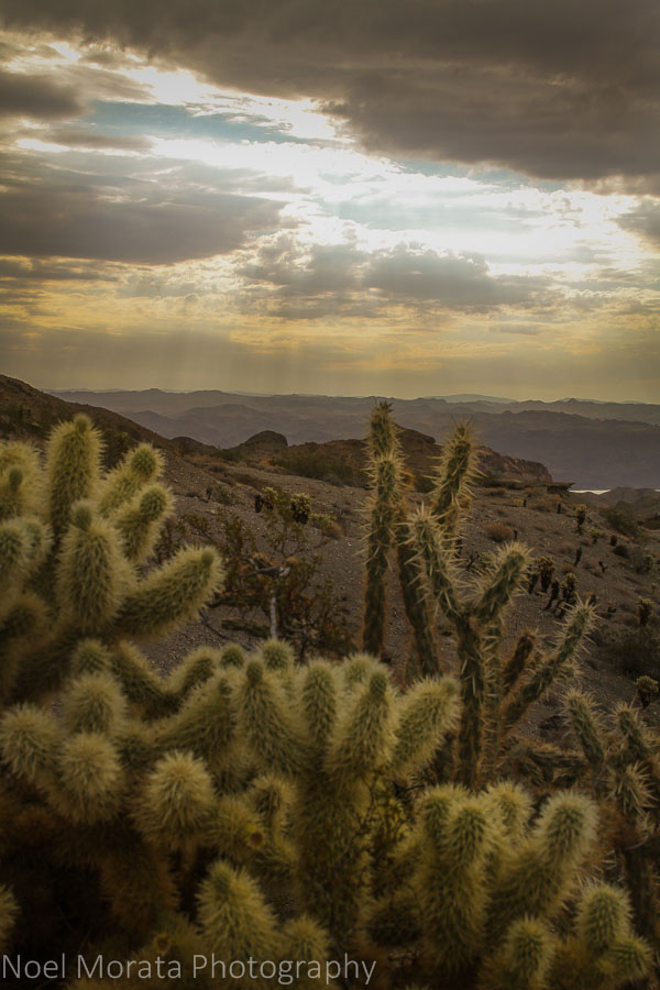 Dramatic skies and cactus landscape