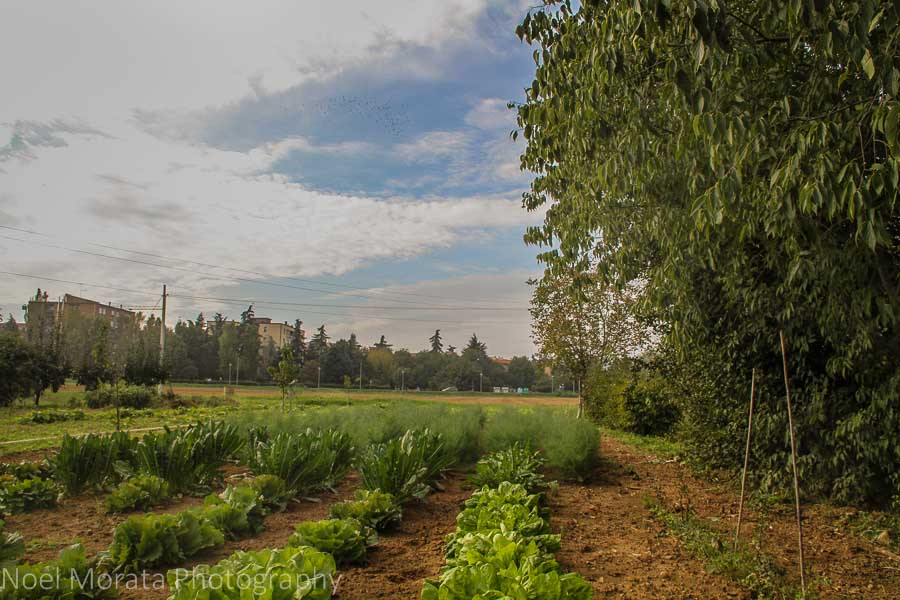 A tour of an agriturismo farm in Bologna