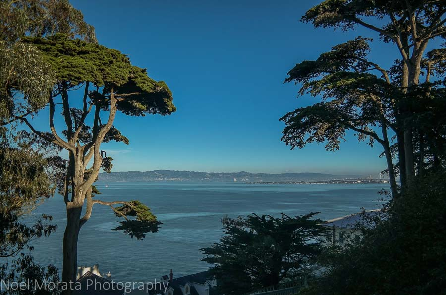 Trees and bay views at Alcatraz prison