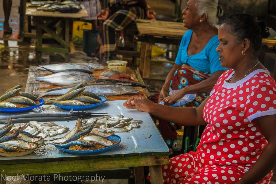 Fresh fish from the seafood market at Negombo