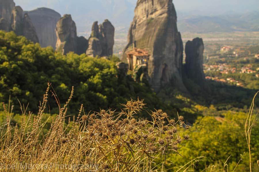 The flora around Meteora, Greece