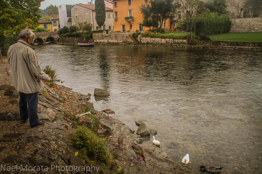 Feeding ducks along the Mincio river, Italy