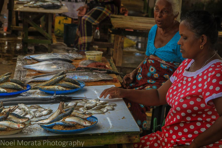 Colorful vendors and fish at Negombo fish market