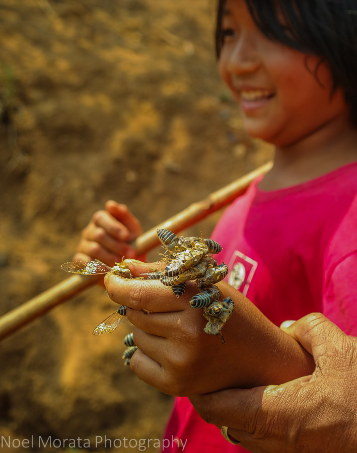 Collecting bugs for roasting, Akha village tribe