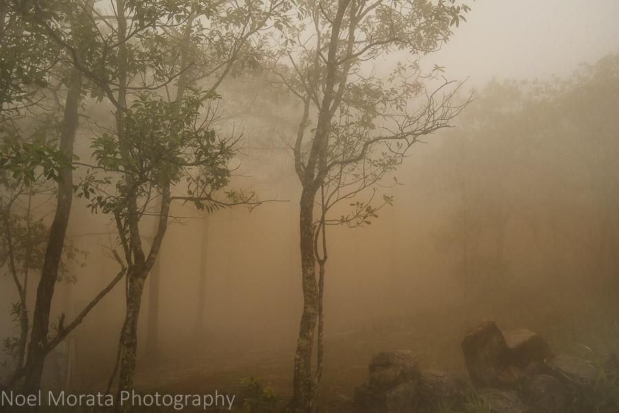Dense fog at Phu Ruea National Park