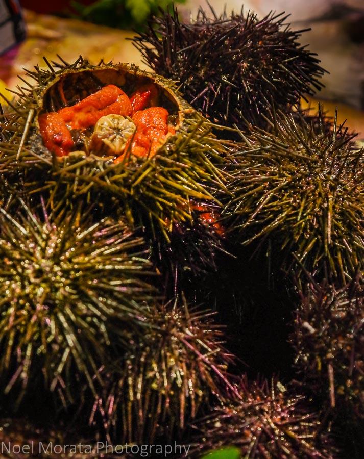 Fresh sea urchins at Les Marche St. Germain des Pres