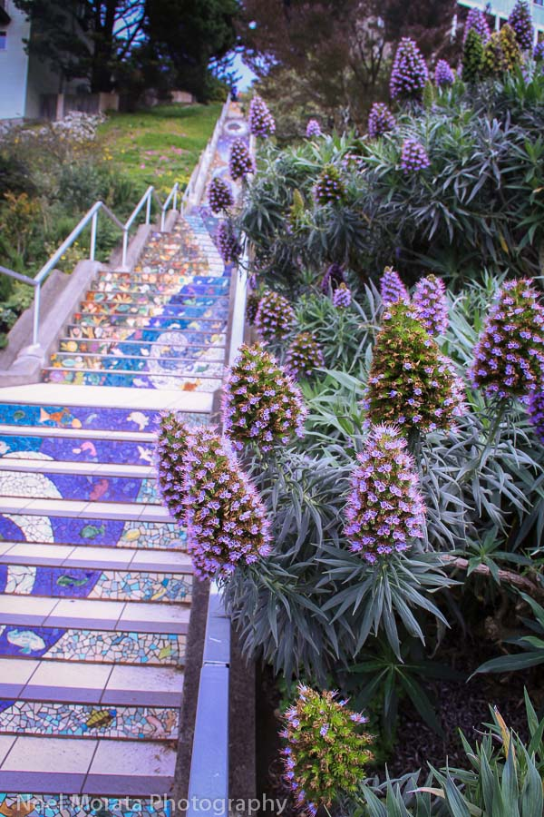 Fun and unusual activities to do in San Francisco - 16th avenue staircase