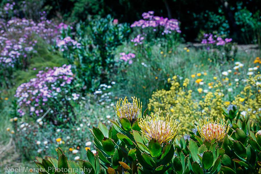 San Francisco Botanical garden at Golden Gate Park