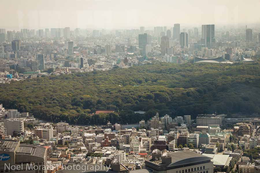 Yoyogi park in Tokyo - Best places to photograph Tokyo Japan