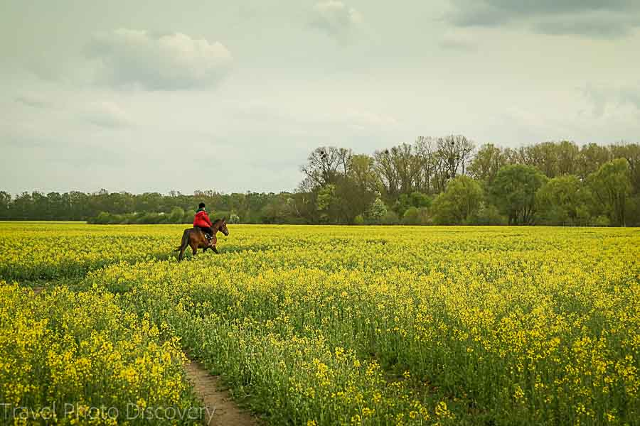 Horseback riding on the outskirts of Berlin Germany