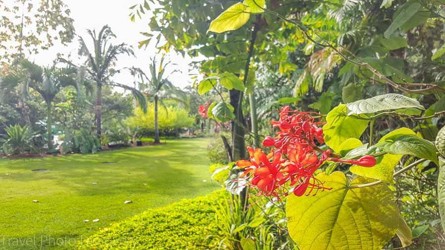 Visiting Miami - Miami Beach Botanical Garden