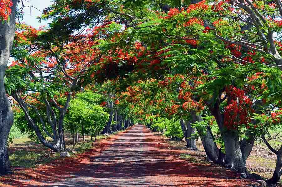 Romantic getaways around the world, Mauritius