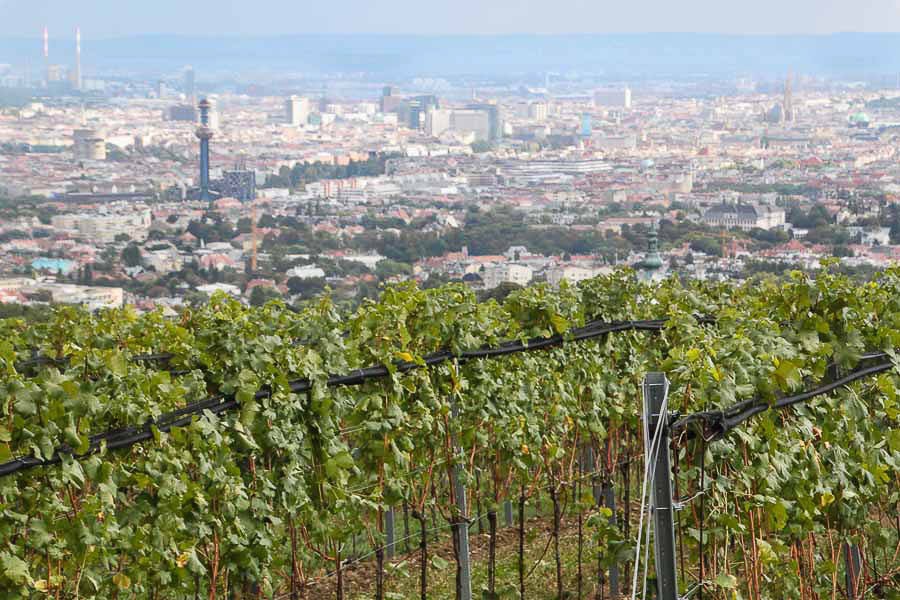 Romantic getaways around the world wine tasting in Vienna