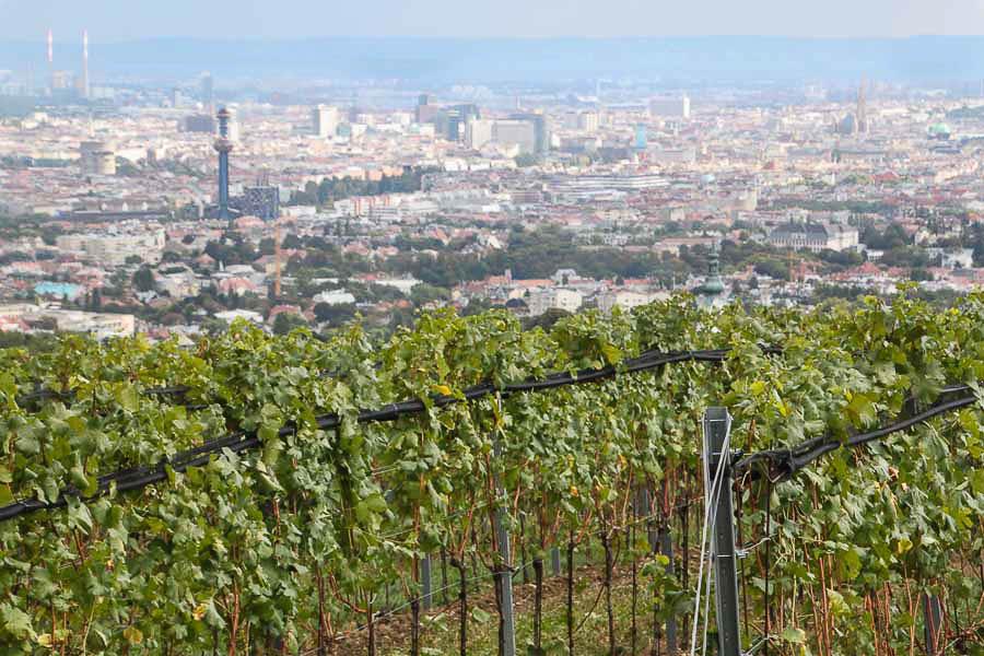 Romantic getaways around the world wine tasting in Vienna