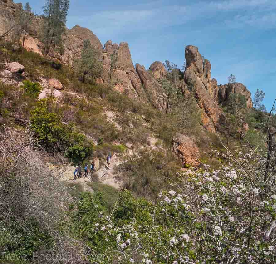 Spring blooms at the Hike Peaks trail in Pinnacles National Park