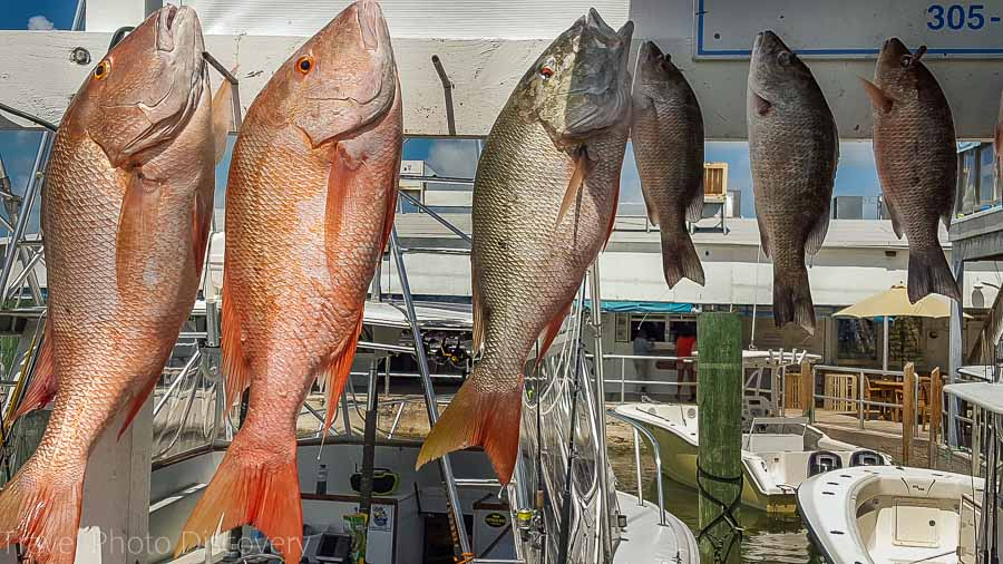 Fish charters at Marathon Keys Florida Keys
