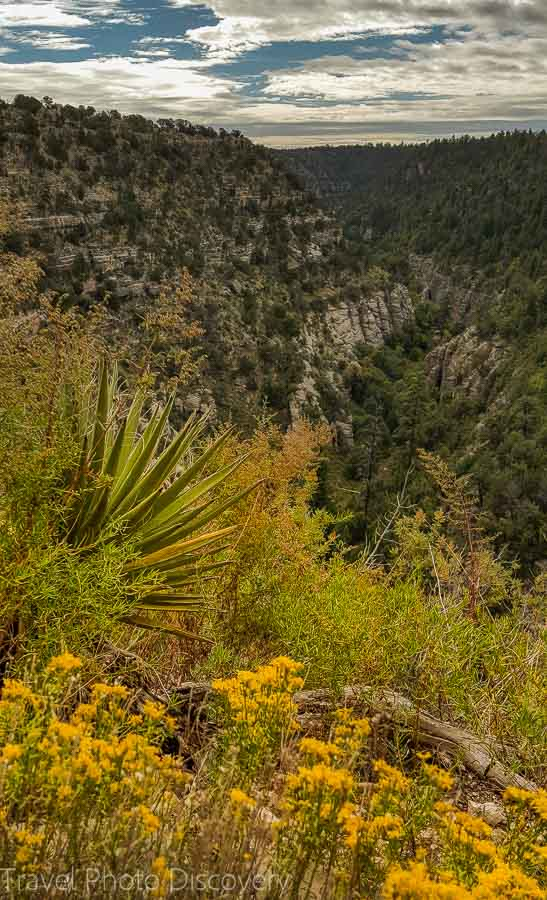 Wildflower blooms at Walnut Canyon National Monument