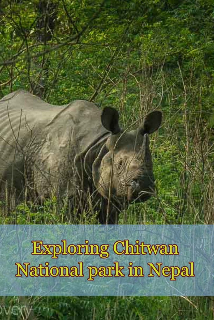 Pinterest pin of Chitwan National park