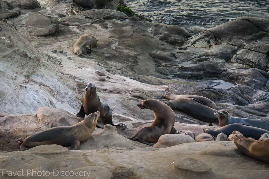 La Jolla sea life and coastal areas