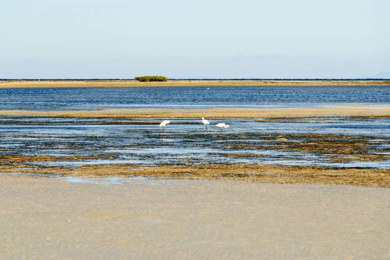 Cagbalete Island Tagak birds and Bonsai Island on the horizon