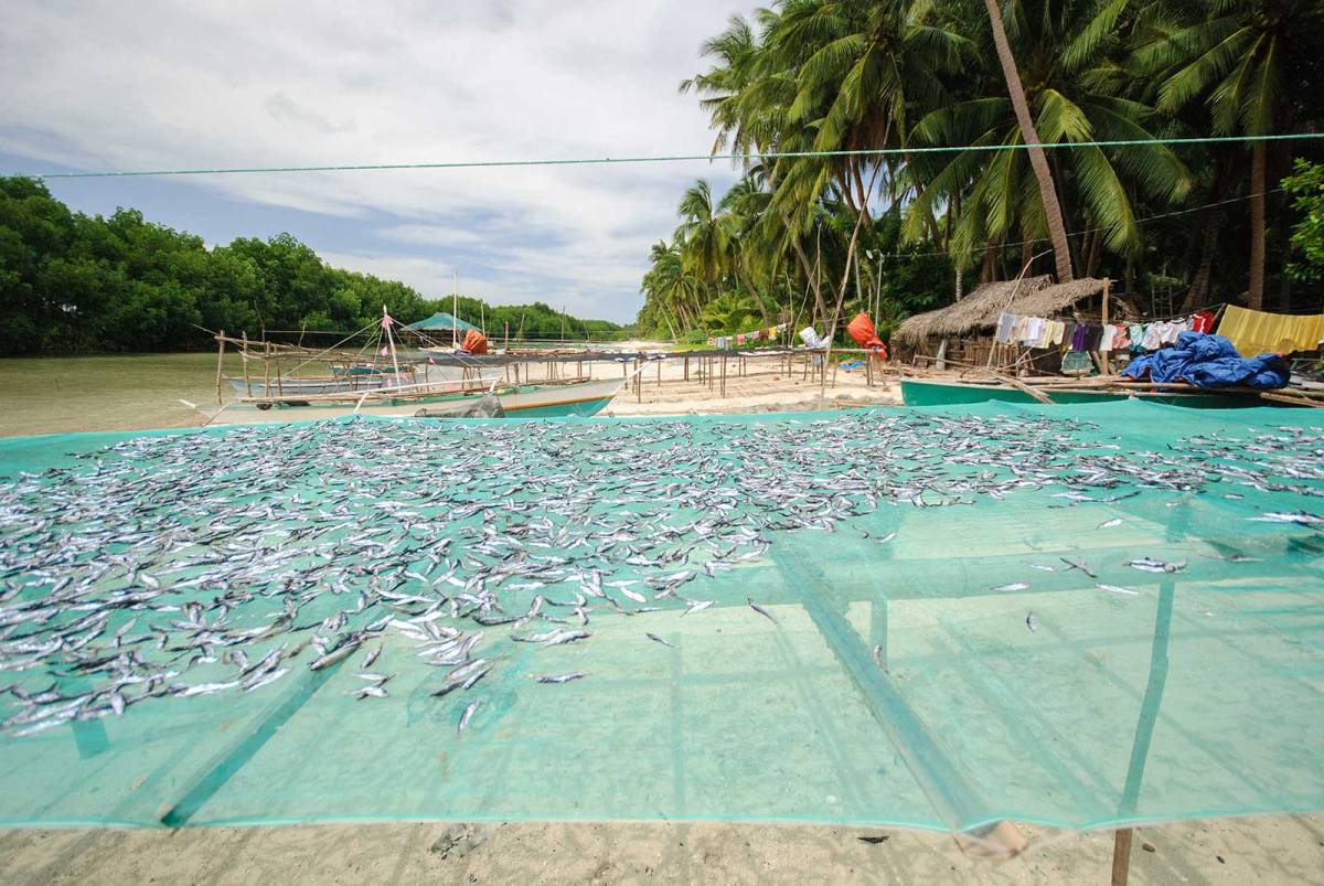 Danggit being dried, Bantayan Island