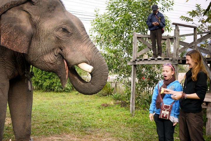 feeding an elephant bananas