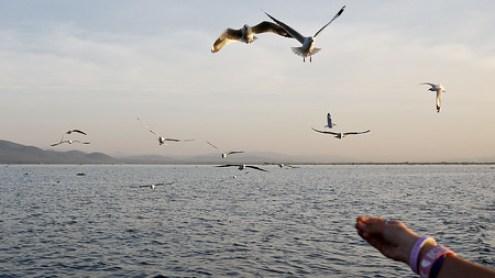 A hand feeding the birds at Inle Lake, Burma (Myanmar).