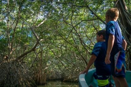 mangrove tunnel celestun