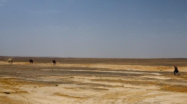 A Bedouin man treks across the desert after his camels in Jordan.