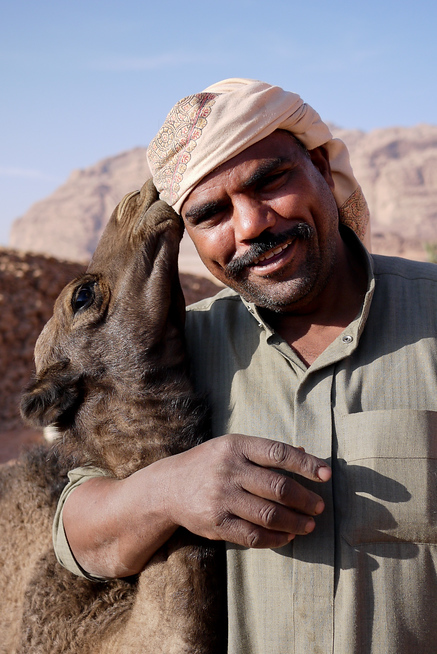 Shabula shows love and care with his camels in Wadi Rum, Jordan