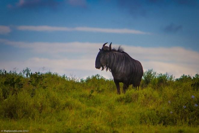 South Africa Wildlife photos