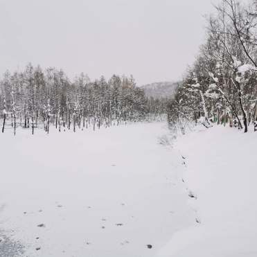 北海道紅葉及落雪最新消息 (持續更新) – Japan Travel 日本旅遊情報網