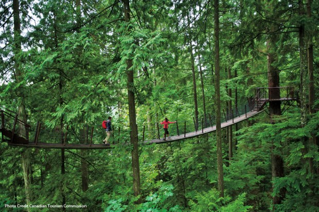 Treetops-Adventure-Horizontal-courtesy-of-CTC