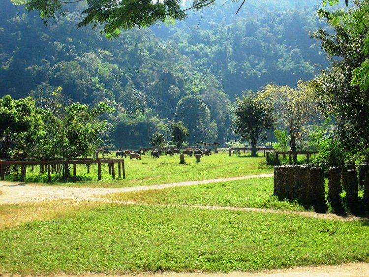 elephant-nature-park Elefantes Tailândia