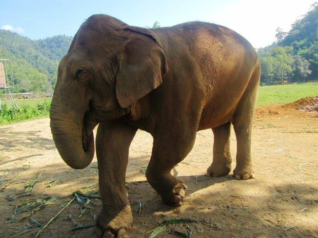 elephant-nature-park2