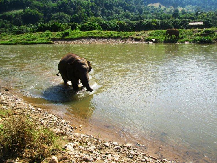 elephant-nature-park4