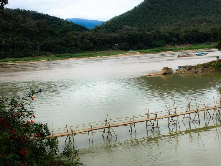 LP - Ponte Bamboo