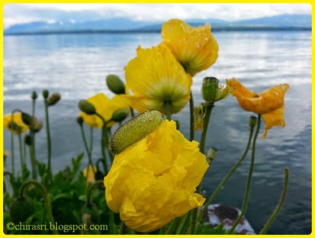 Fresh blooming flowers
