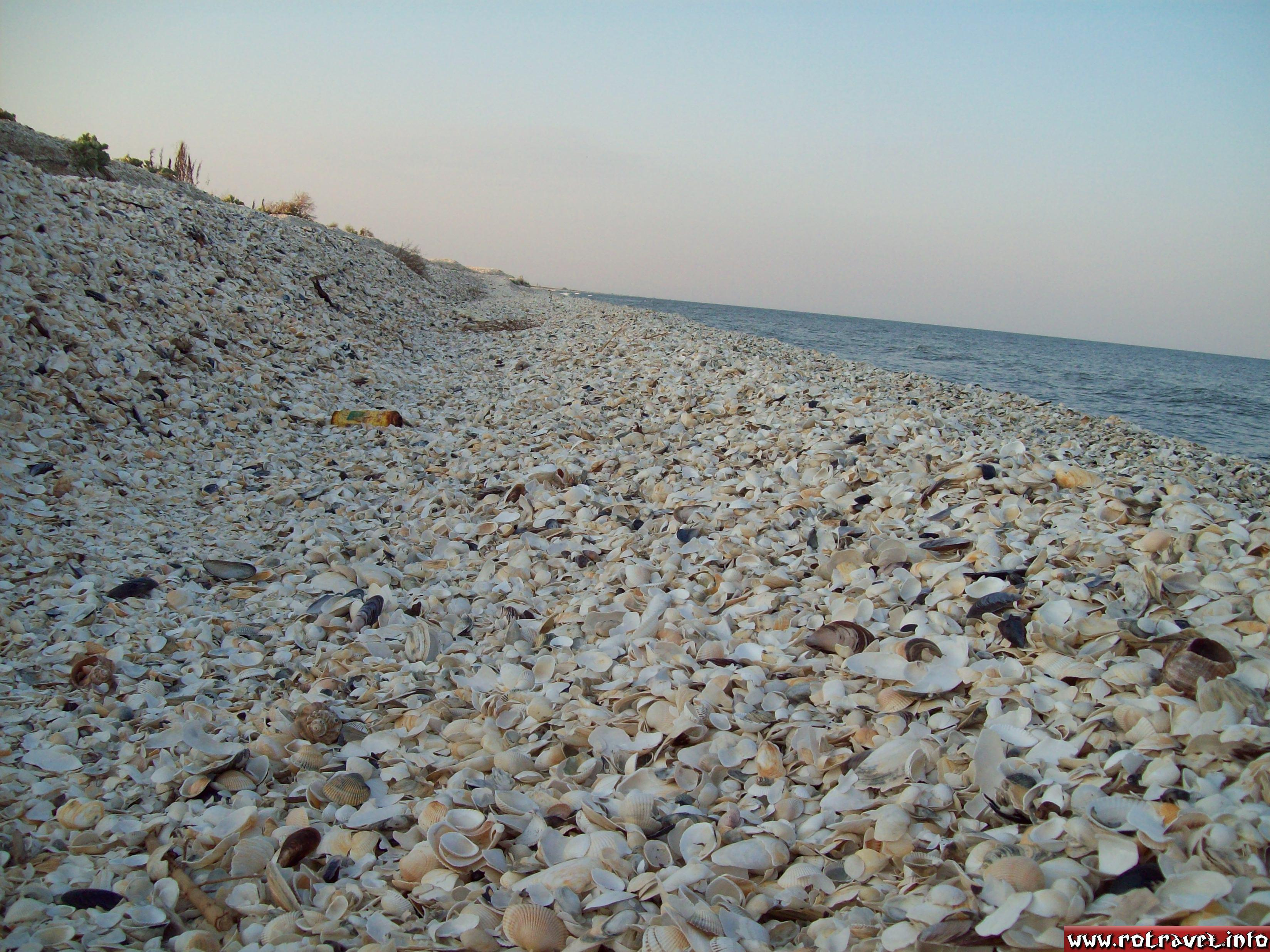 Millions of sea shells...