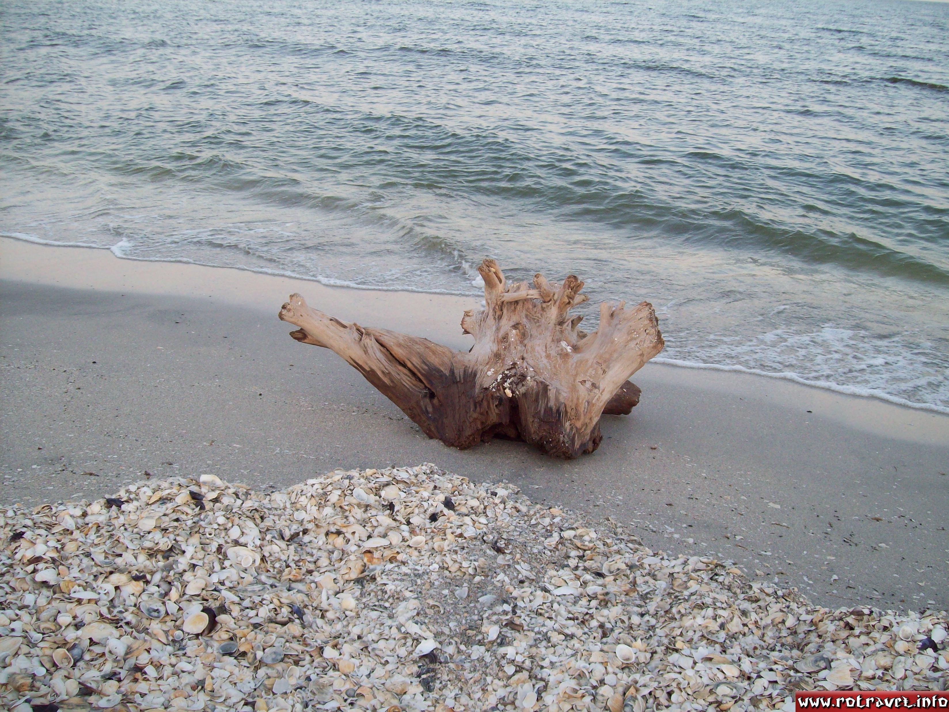 A log astray