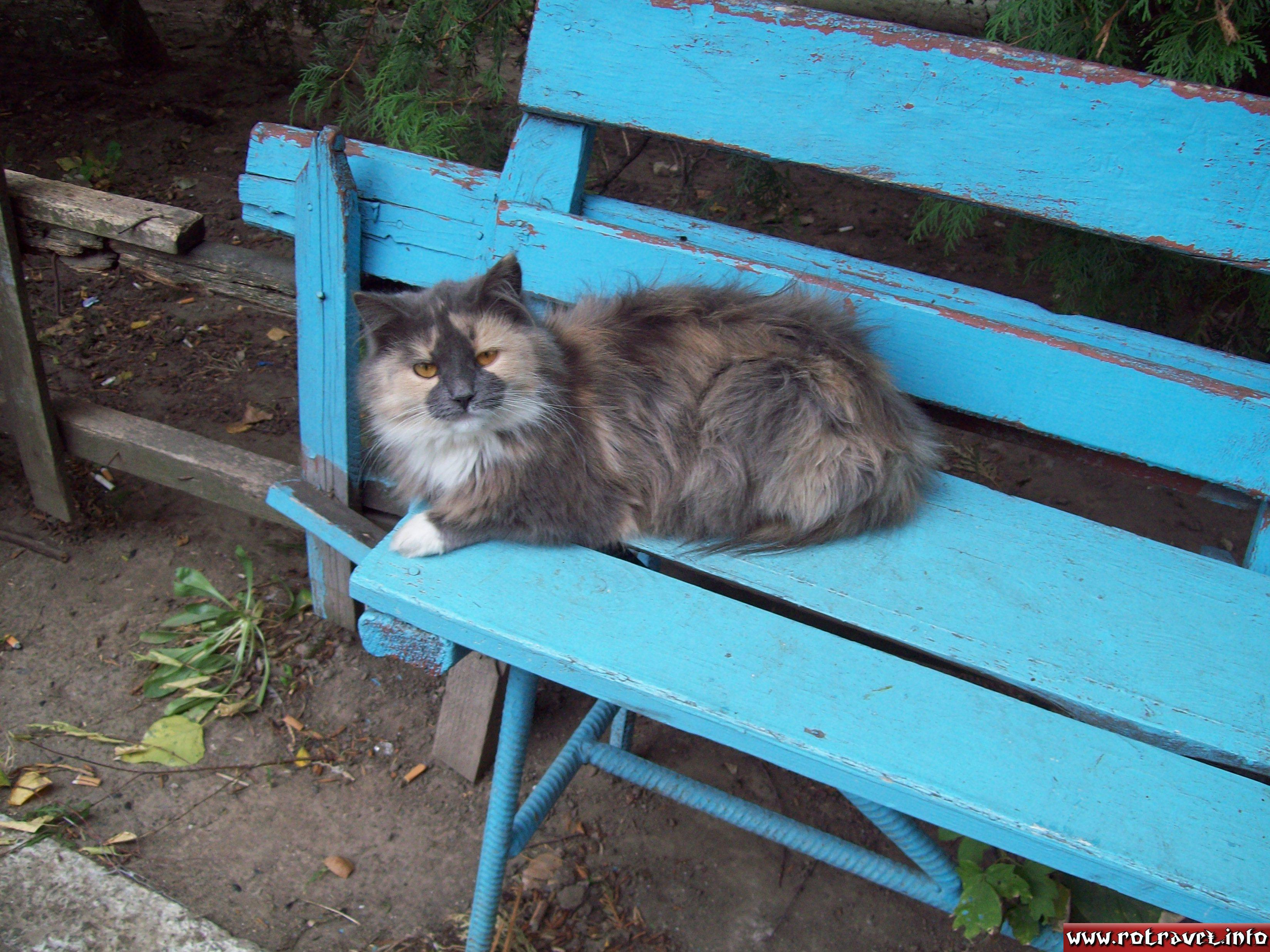 A sweet cat :P