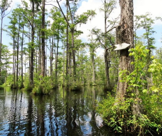 Cypress Gardens South Carolina