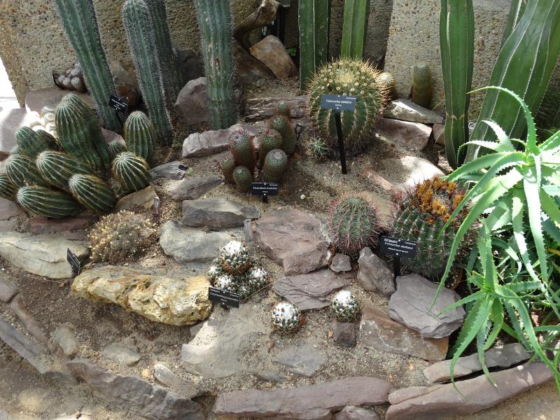 Kakteen im Botanischen Garten