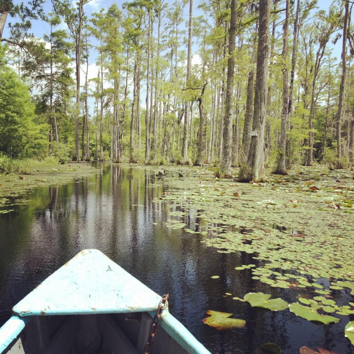 Mit dem Boot durch die Sümpfe der Südstaaten Cypress Gardens South Carolina