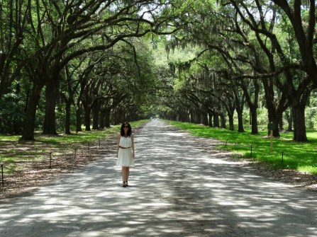 Wormsloe Plantation Eichenallee Savannah Georgia