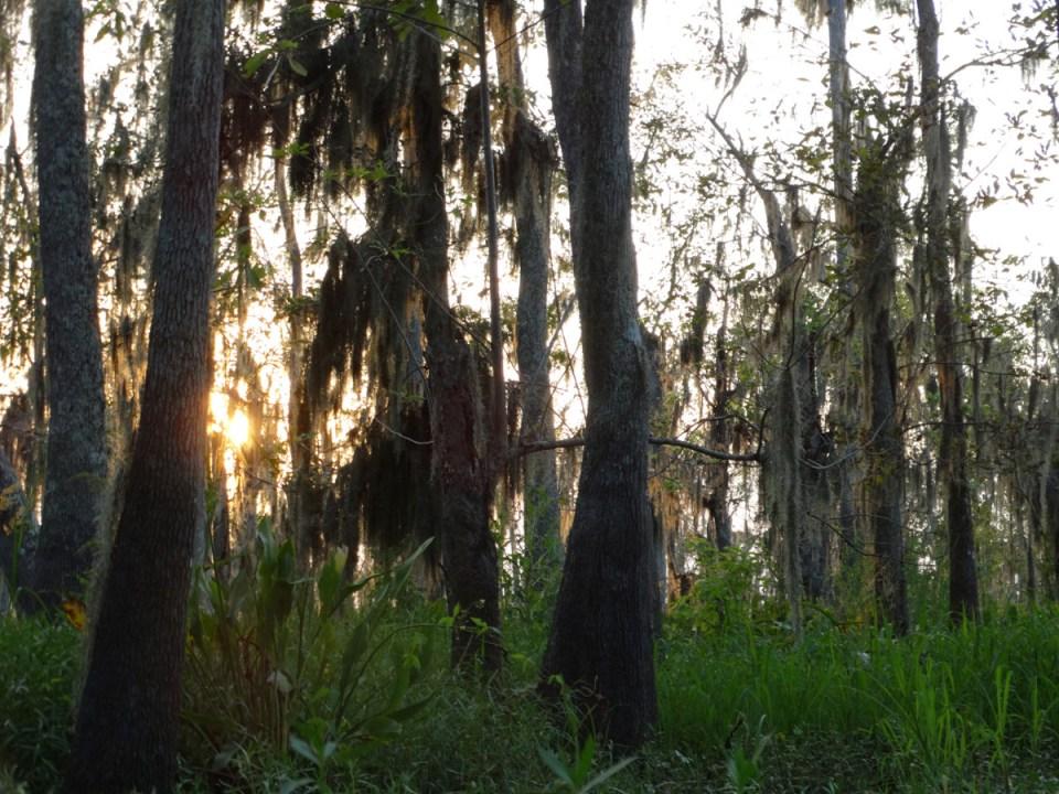 nola bayou sonnenuntergang