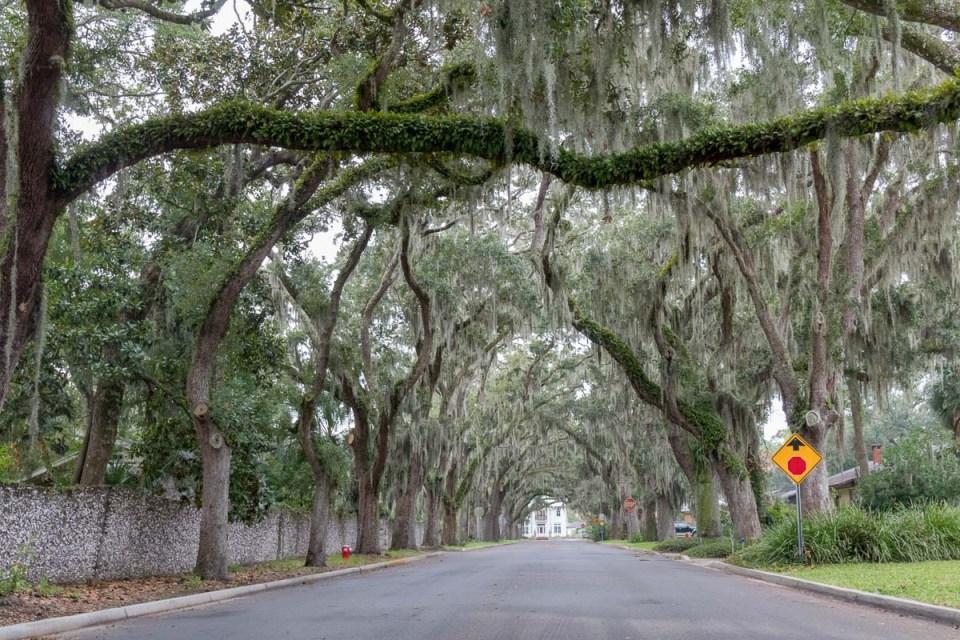 Wunderschöne Eichenallee in St. Augustine