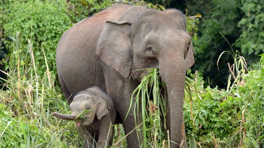 Elephant 3d Wallpaper 5 Amazing Animals Of Malaysia Backpacking With Kilroy
